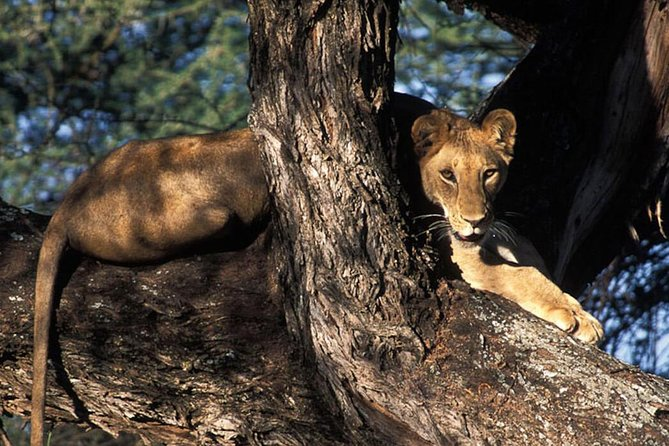 Three Days Camping Safaris