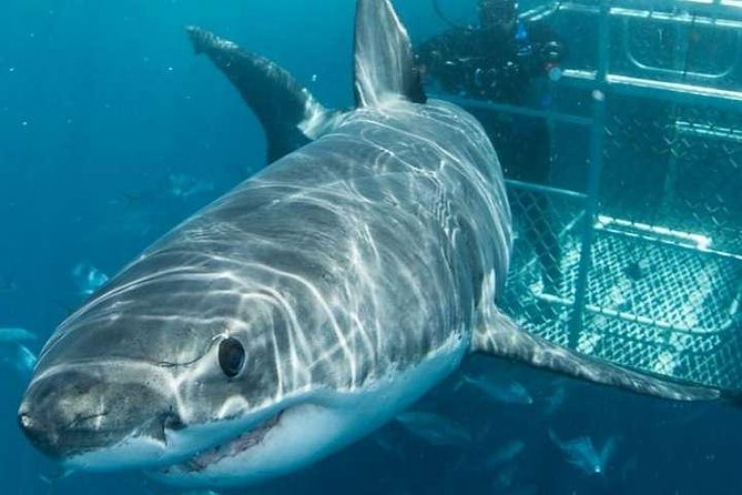 Cape Town 3-Day Attraction Tours: Shark Diving & Cape Peninsula & Wine Tasting