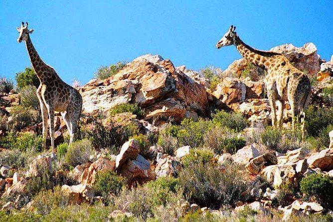 Cape Town Private, Inverdoorn Safari Tour