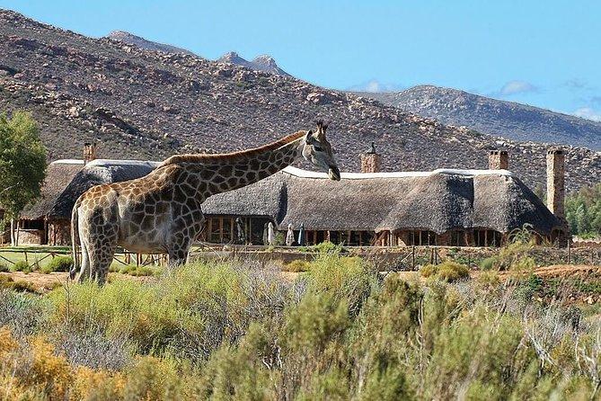 Cape Town Tour, Aquila Safari Game Reserve Overnight & Accommodation