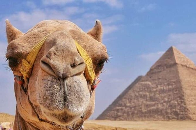 Camel Ride Iat the Pyramids