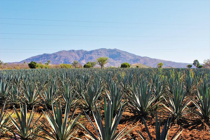 Private Tequila Tour photo 13