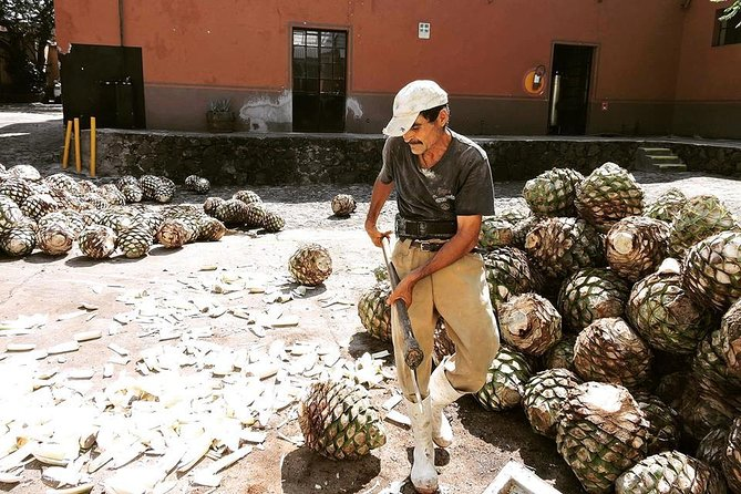Private Tequila Tour photo 8