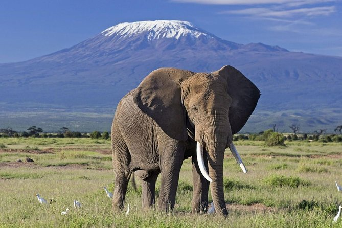 5 Days Amboseli Tsavo West Tsavo East Wildlife Tours