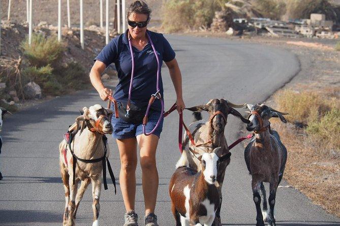 Goat trekking Fuerteventura