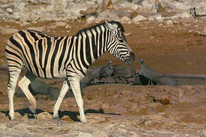 Etosha Private Safari 5days/4nights