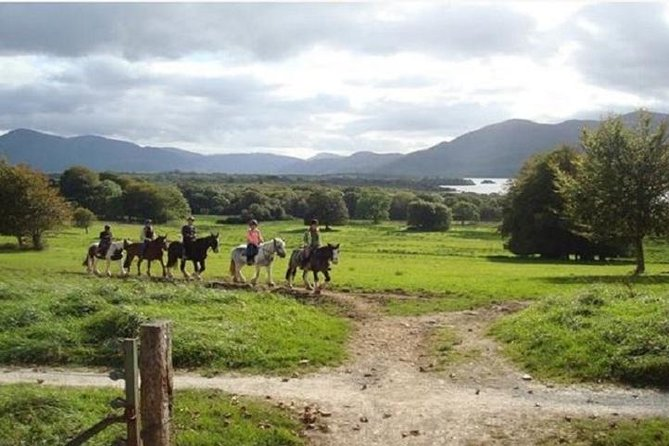 Killarney National Park Horseback Ride. Co Kerry. Guided. 1 hour.