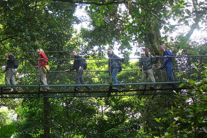 Full Day Monteverde Cloud Forest Tour from San Jose photo 4