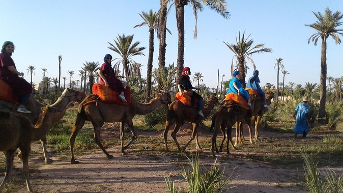 Camel ride at sunset in Marrakech palm grove