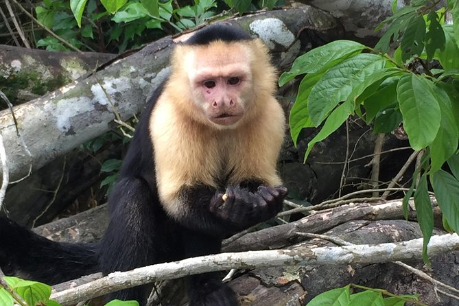 Private Boat tour Monkey Islands / Gatun Lake photo 1