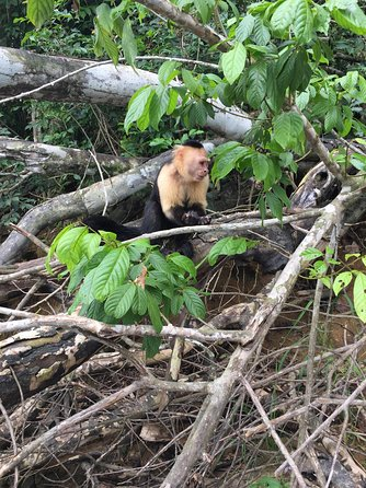 Private Boat tour Monkey Islands / Gatun Lake photo 2