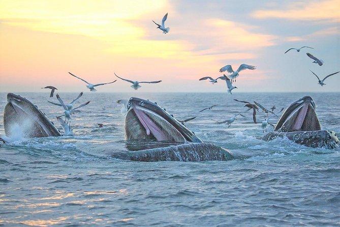 Boston Supereconômico: Cruzeiro com observação de baleias mais entrada para New England Aquarium
