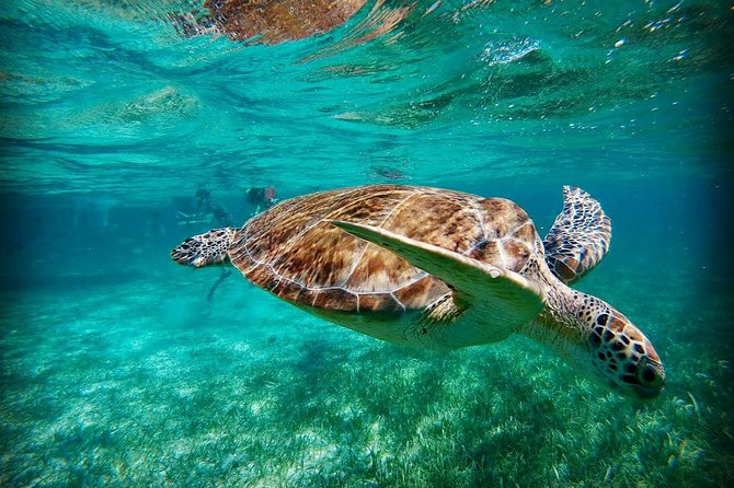 Hol Chan Full Day Snorkeling Experience from Caye Caulker