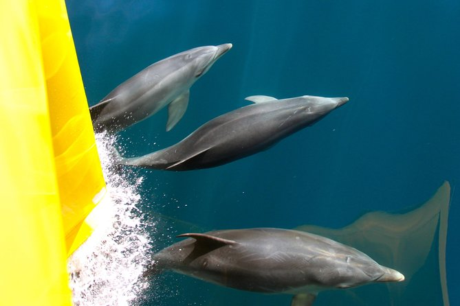 Bay of Islands Dolphin Nature Cruise