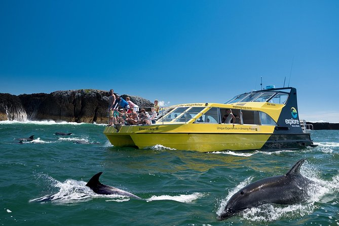 Bay of Islands: Dolphin Nature Cruise