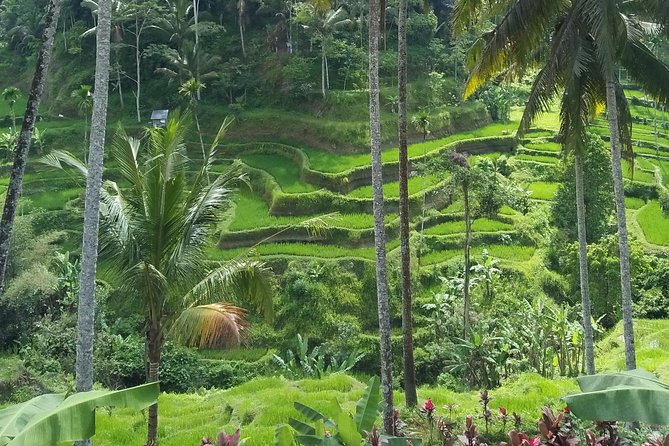 Private Ubud Full Day Tour