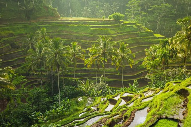 Private Ubud Tour with ATV Ride, swing, and lunch