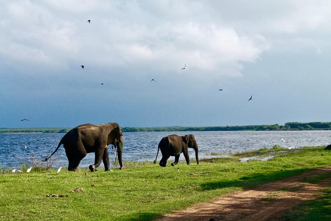 Amazing Sri Lanka (24 Days)