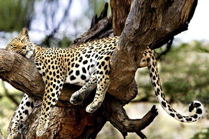 7-Day Kenya Tanzania Wonder Safari