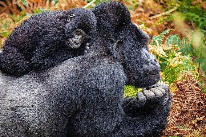 3 Days Gorilla Trekking in Bwindi Impenetrable National Park