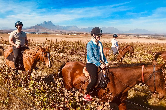 Trail riding in the winelands