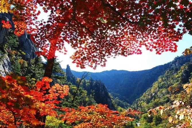 Essential Autumn foliage of Korea 3 days with Sorak and Odaesan Mountain