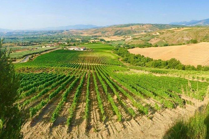 Wine Tour in Calabria - Tenuta Celimarro Winery