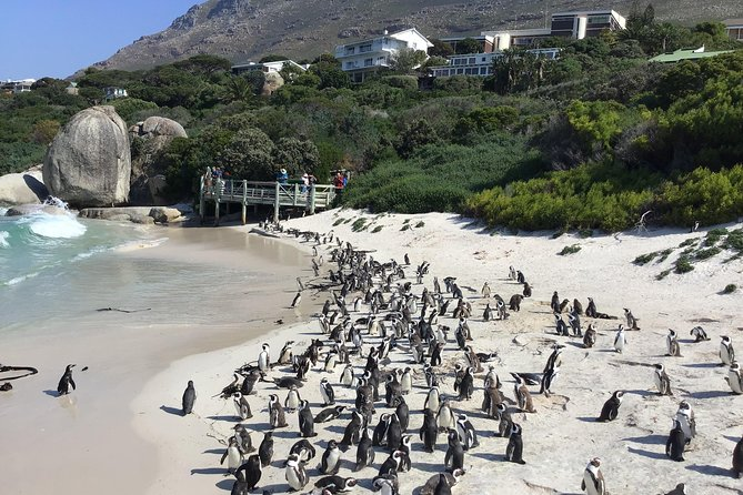 Full-Day Cape Point & Cape Peninsula Sightseeing Tour from Cape Town