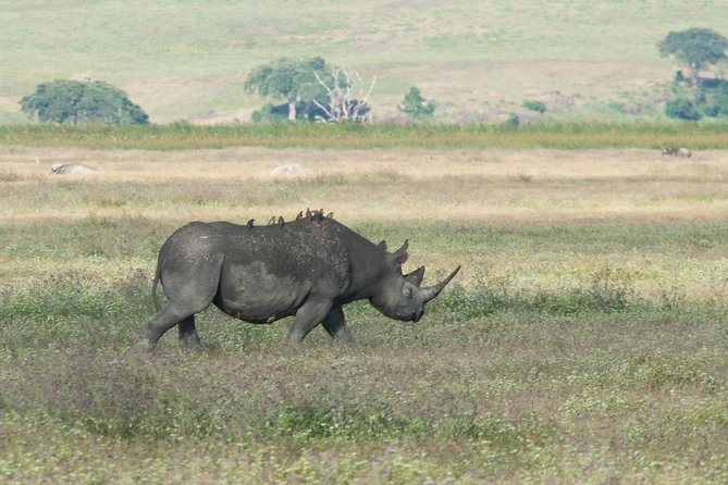 Ngorongoro Crater Day Tour From Moshi