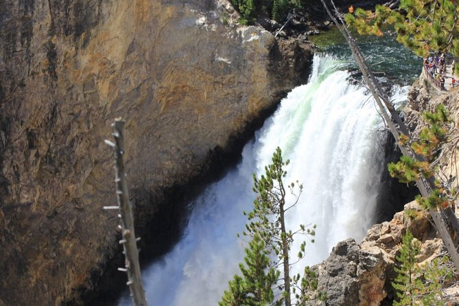 Yellowstone Guided Day Tour From Jackson Hole