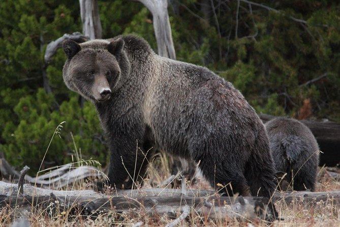 Visite guidée de Yellowstone depuis Jackson Hole