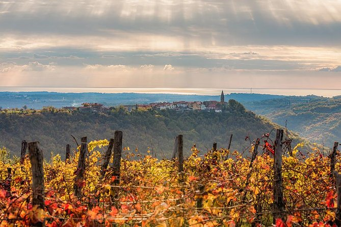 THE BEST OF LAND AND SEA – Slovene Istria and Trieste photo 2