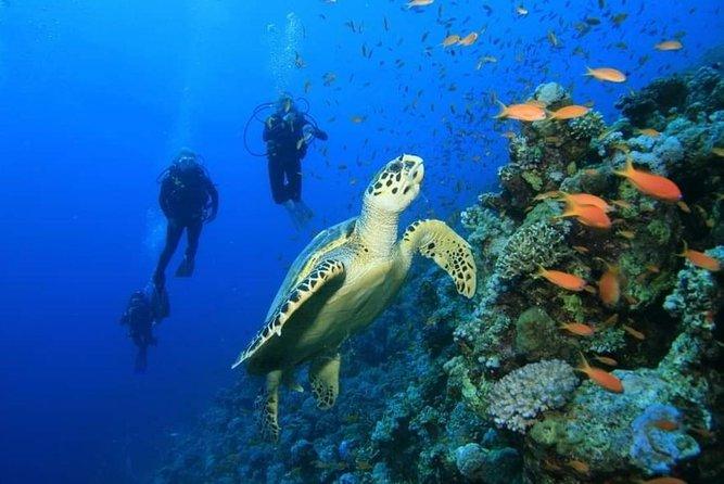 PADI Two Tank Fun Dive in the great Mesoamerican reef, Costa Maya, Mahahual.