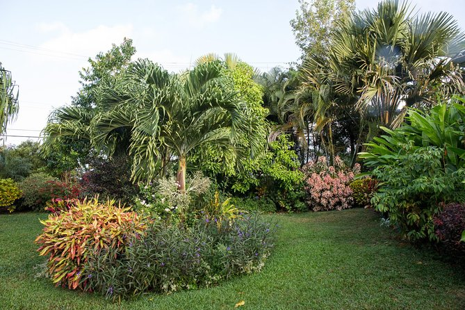 Grenada 3 Spice Gardens Tour photo 8