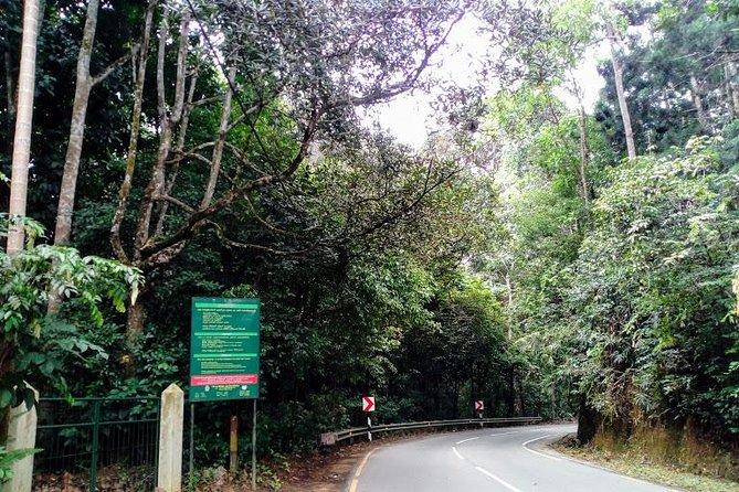 Kottawa Rainforest and Arboretum Tour