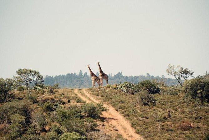 7 days Kenya Masai Mara Amboseli and Lake Nakuru Joining tour
