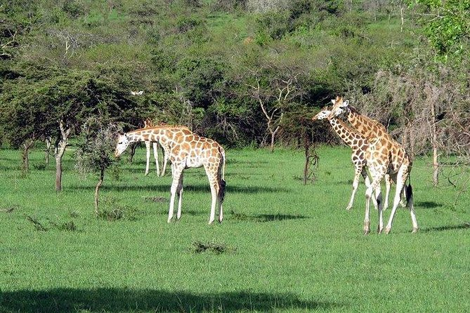 6 Day Uganda Safari in Murchison Falls and Bwindi Impenetrable Park photo 13