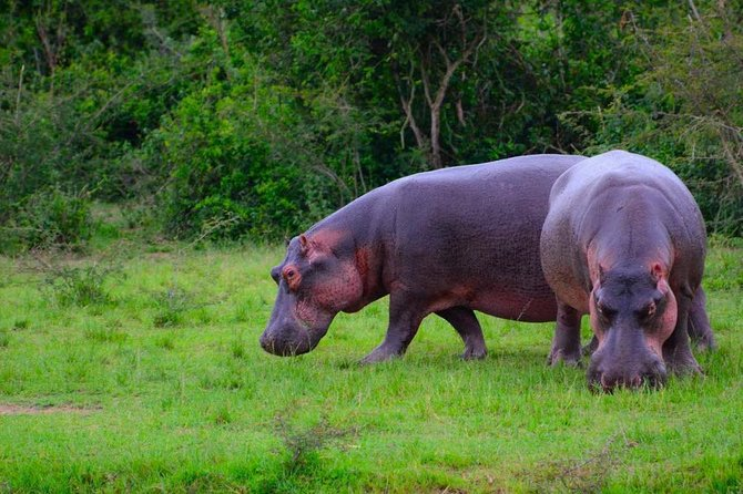 6 Day Uganda Safari in Murchison Falls and Bwindi Impenetrable Park photo 6