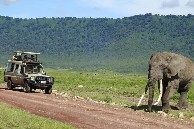 Unforgettable wildlife experience with Vianney's untamed expeditions