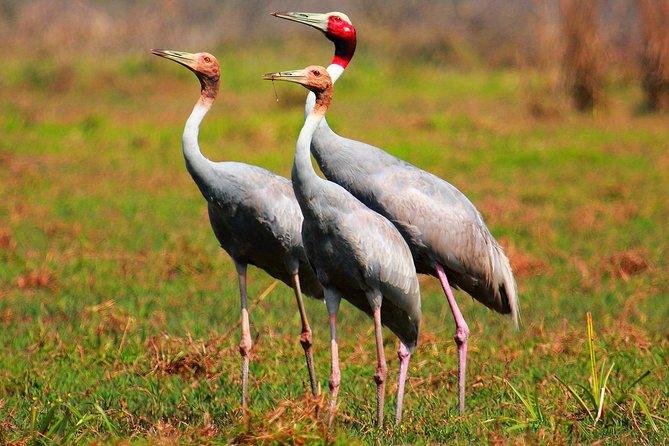 Myanmar Bird Watching Tour