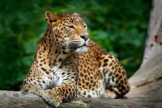 Half-Day at Yala National Park ex-Hambantota | Jeep Safari Included