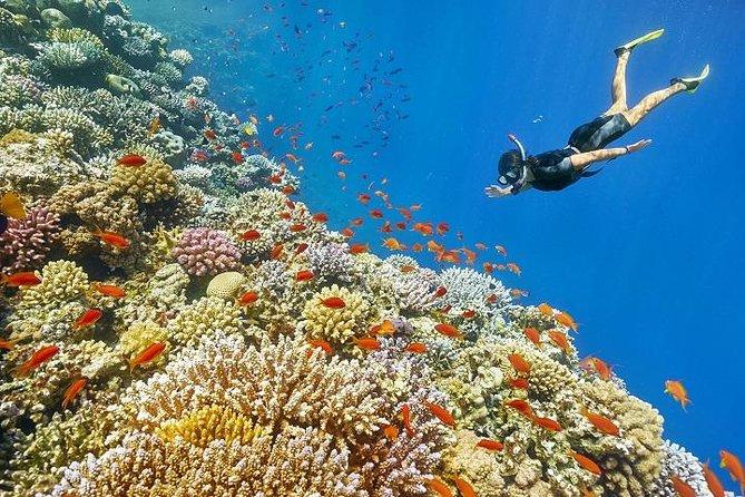 Mahmaya – Giftun Snorkelling Trip
