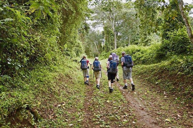 Kilimanjaro Marangu Day Hike