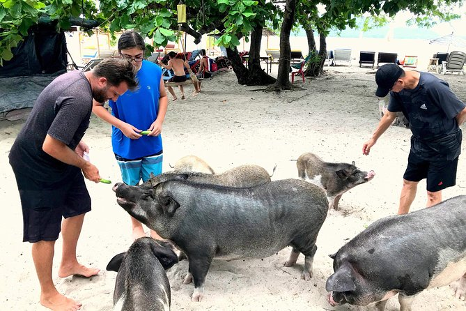 Snorkeling & Pig Island Experience photo 16