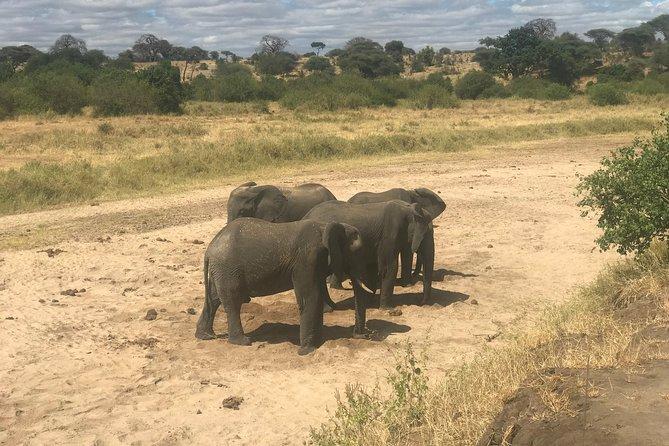 6 Days Family Grand Tour Tanzania