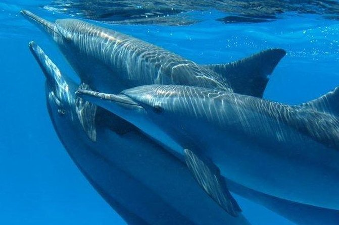 4 hours snorkeling with dolphins Excursion by speedboat - Hurghada