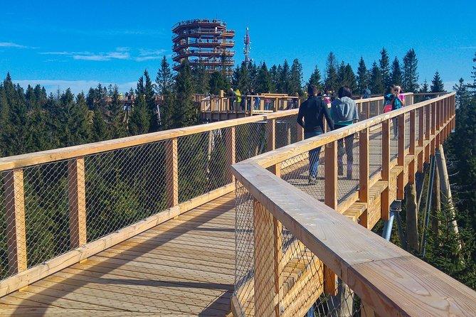 Treetop Walk Bachledka na Eslováquia e excursão privada a Zakopane saindo de Cracóvia