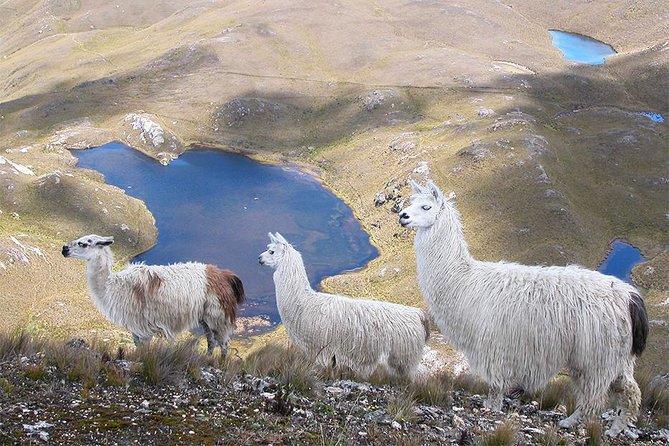 Cajas National Park Full Day Visit