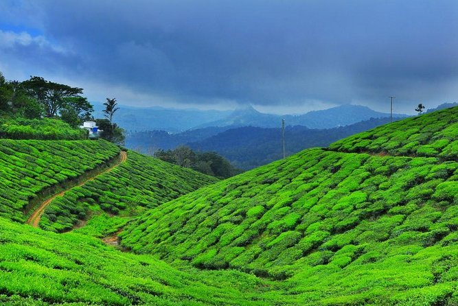 5 Days Private Kerala Tour package with Houseboat Stay