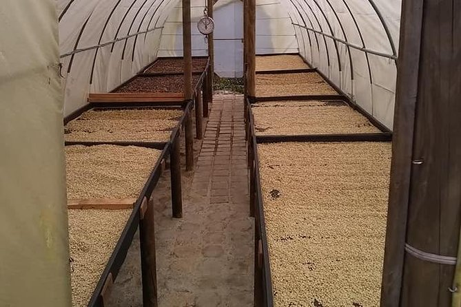 COFFEE TOUR: run of coffee and its history
